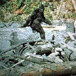 Legal to Shoot Bigfoot – Texas 2014-2015 Hunting License go on sale August 15th